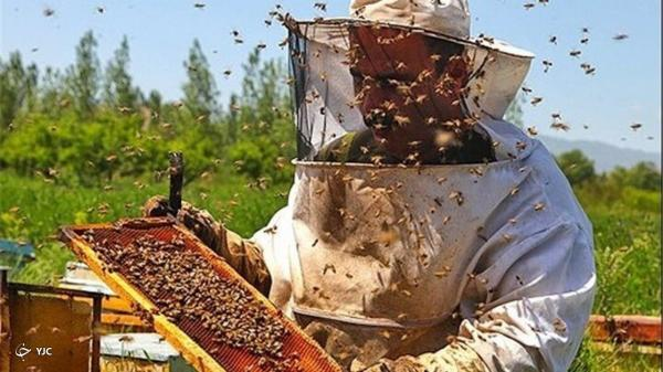بیش از 600تن عسل در چالدران فراوری می گردد